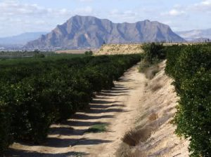 Approaching Callosa. [Photo from Google images]